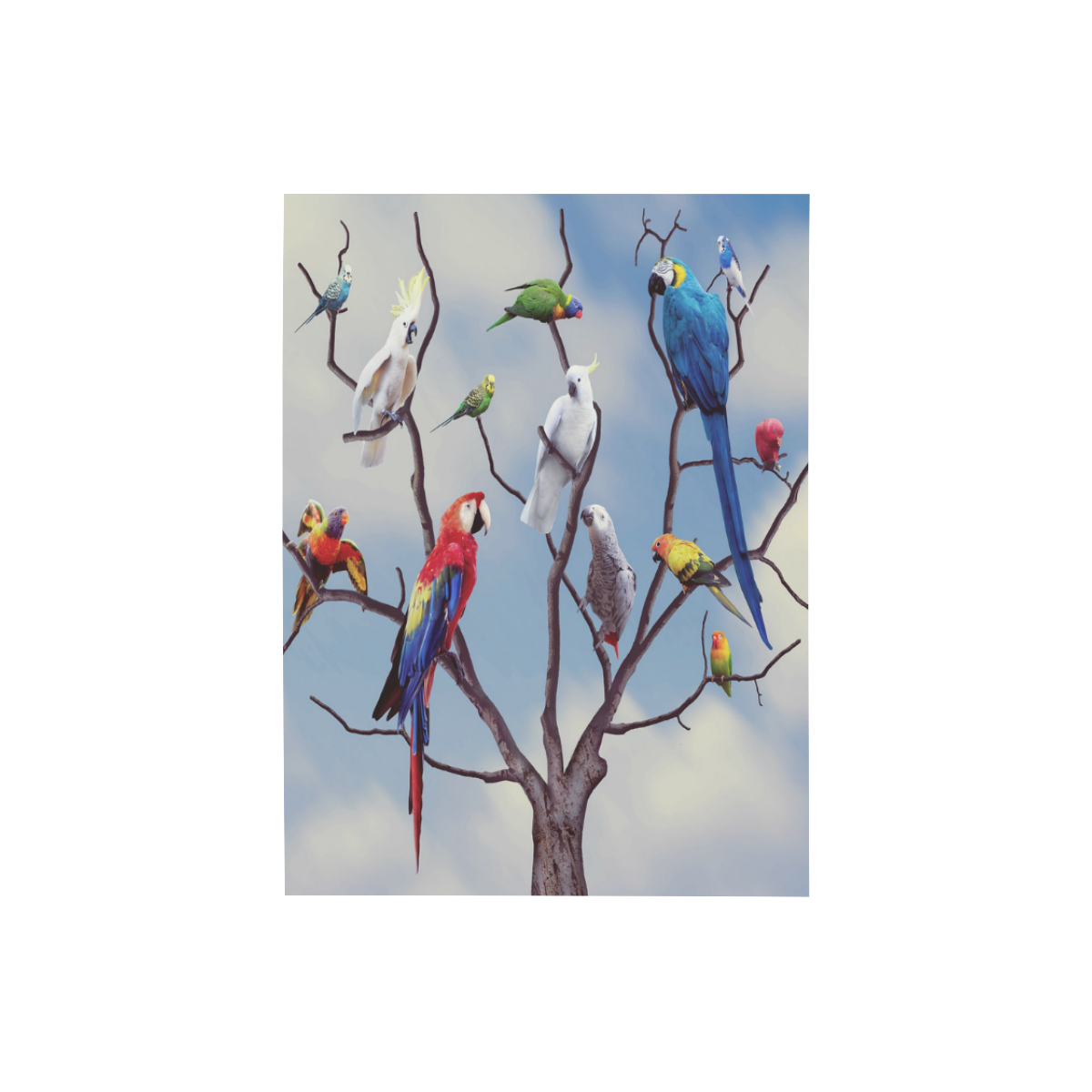 """Parrot Conference Photo Panel for Tabletop Display 6""""x8"""""""