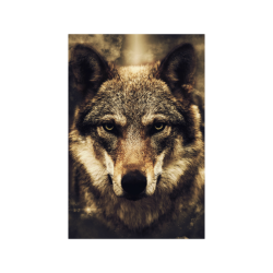 """Wolf 2 Animal Nature Poster 20""""x30"""""""