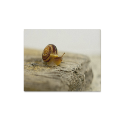 "Solitary Snail Canvas Print 20""x16"""