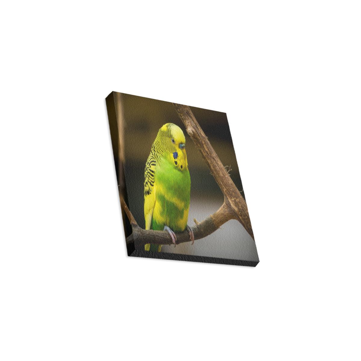 "Pretty Parakeet Canvas Print 8""x10"""