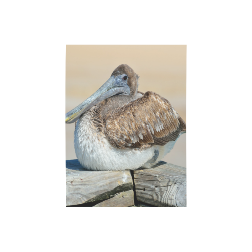 """Pelican On The Dock Photo Panel for Tabletop Display 6""""x8"""""""