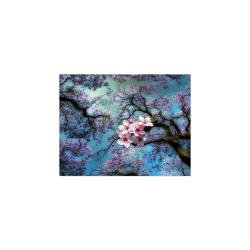 "Cherry blossomL Poster 11""x8.5"""
