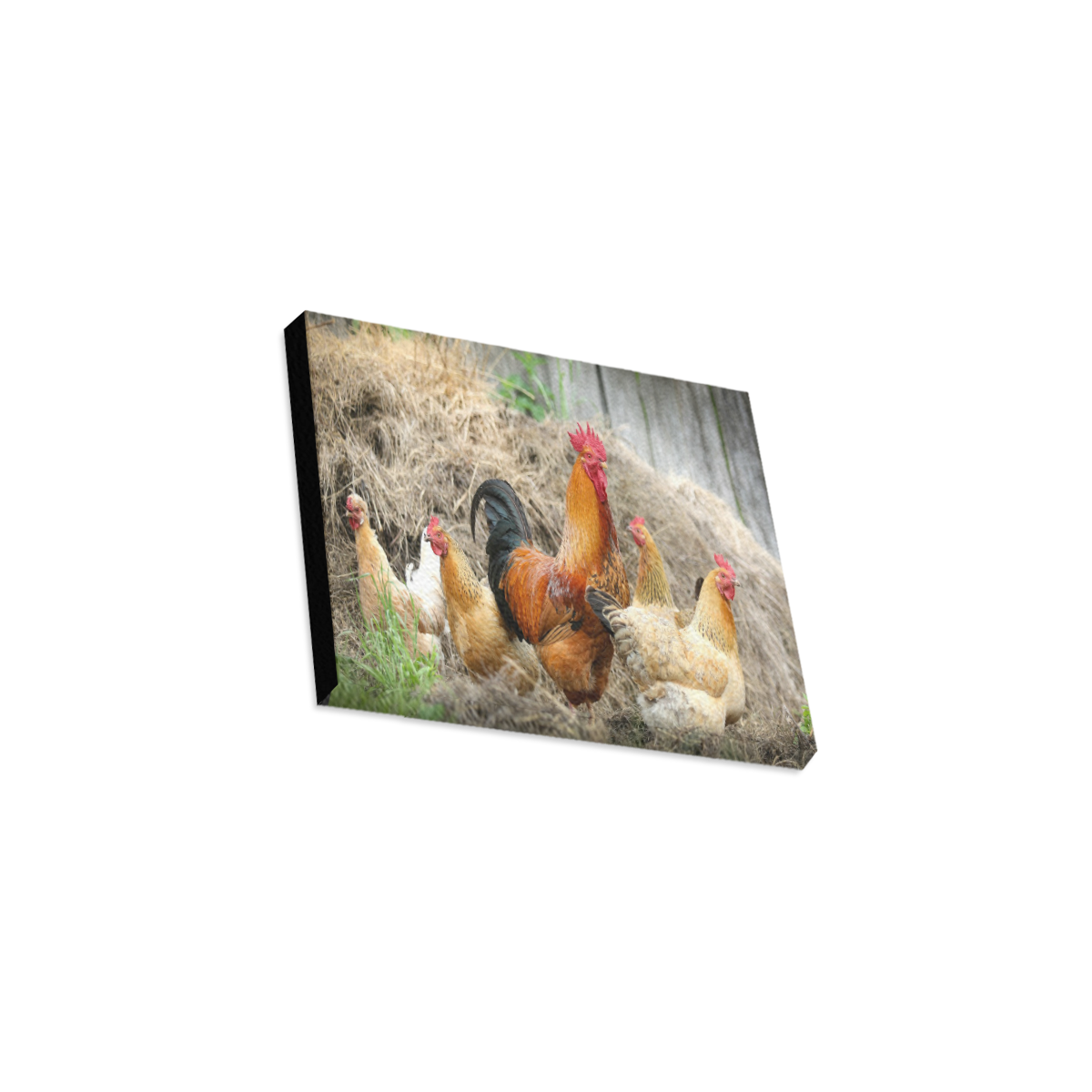 """Farmside Roosters Canvas Print 10""""x8"""""""