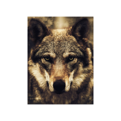 """Wolf 2 Animal Nature Poster 18""""x24"""""""