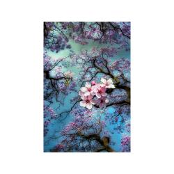 "Cherry blossomL Poster 20""x30"""